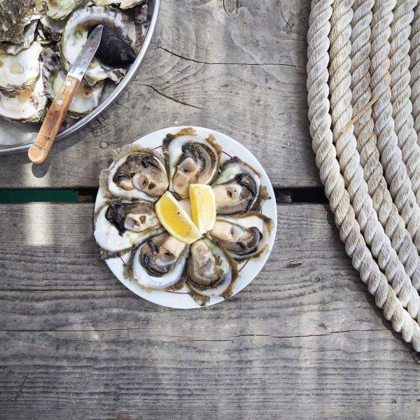 oyster farm in Croatia